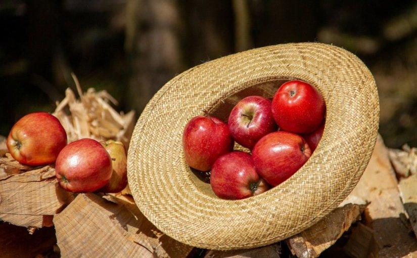 Le goût des pépins de pomme · KatharinaHagena