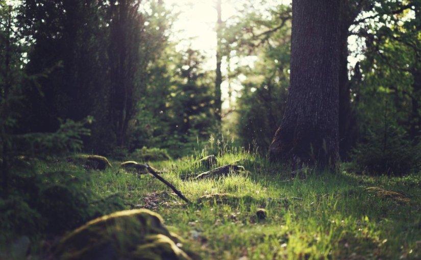 Lorsque le dernier arbre · MichaelChristie